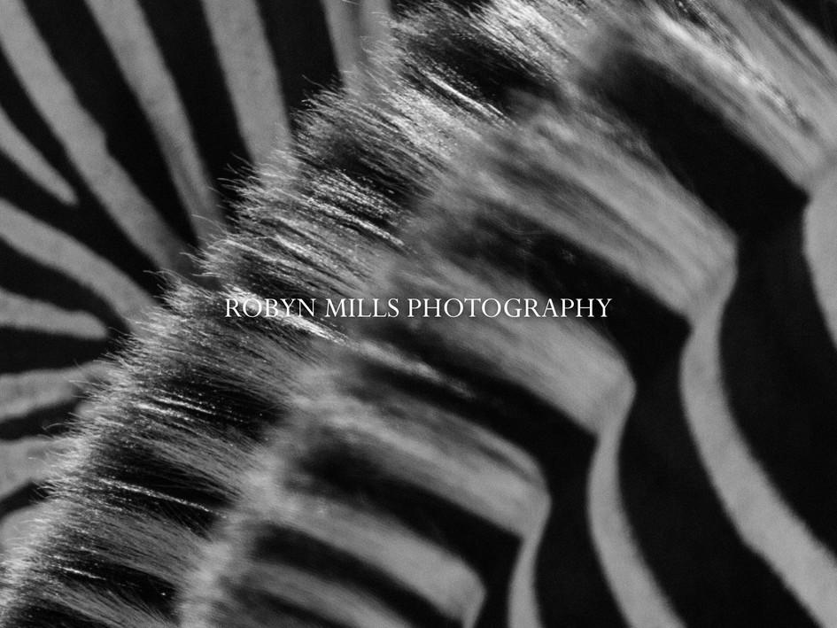 Zebra Mane