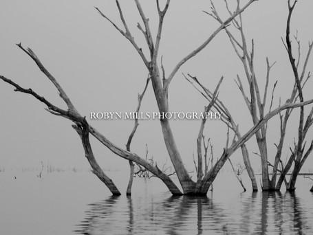 Petrified Trees 1/3