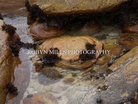 Rock Pools 2/4