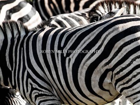 More Stripes