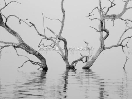 Petrified Trees 3/3