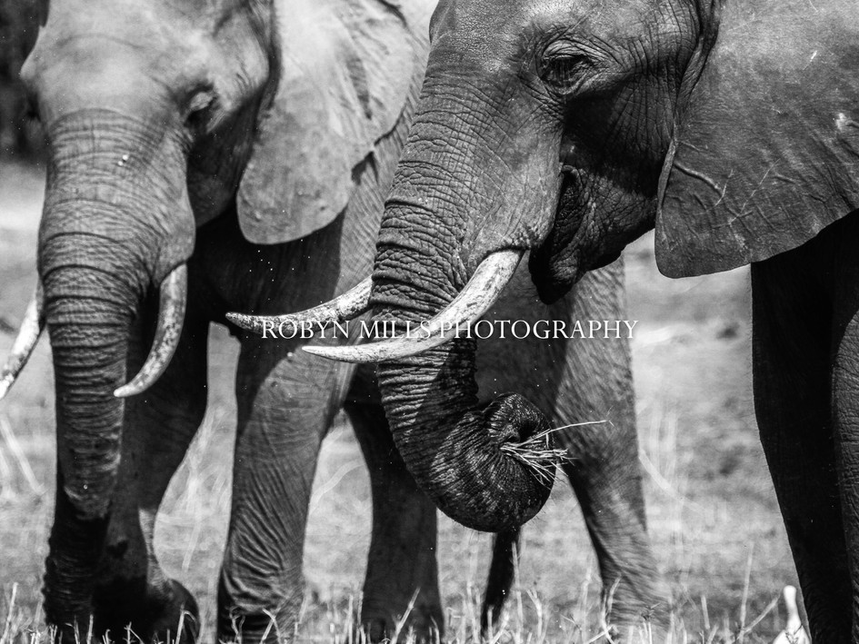 Trunks And Tusks