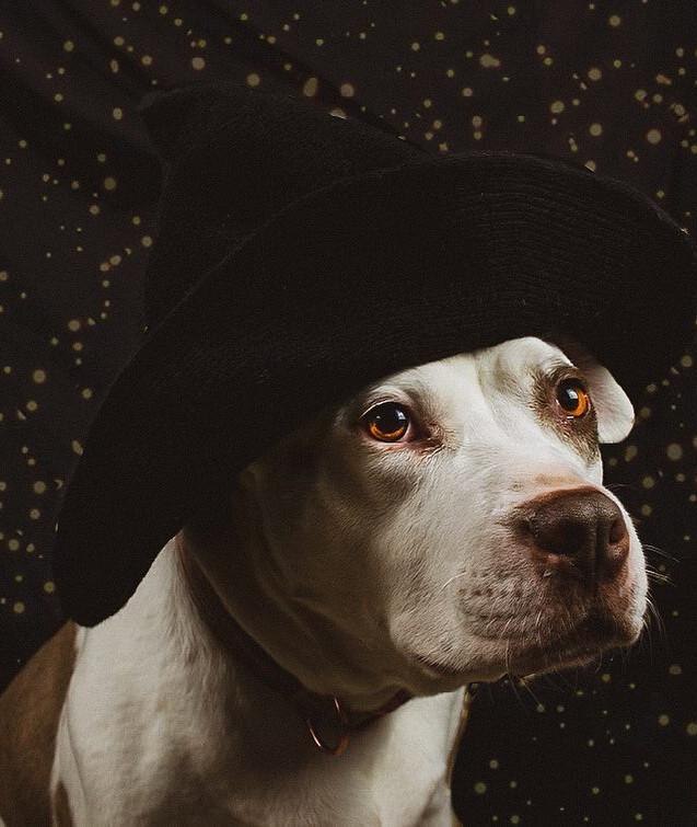 Ava T. Dog