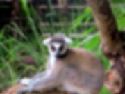 Madagaskar3.jpg