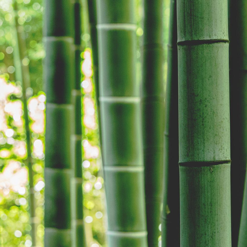 bamboo plant - sustainable fabric