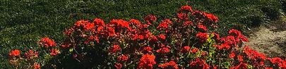 winery_flowers.jpg