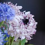 flower-icon1000.jpg