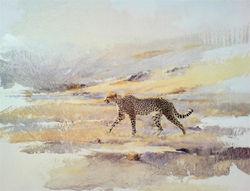 Cheetah Walking - GH010