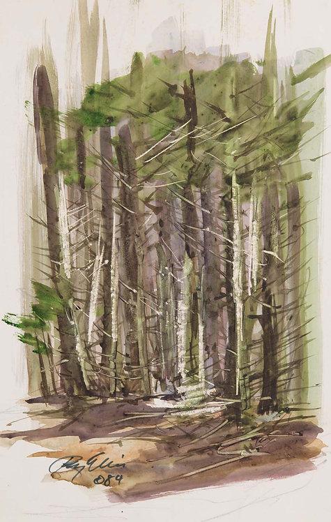 Woods, Ragged Island, ME