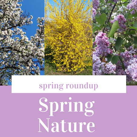 Spring Nature Photo Roundup