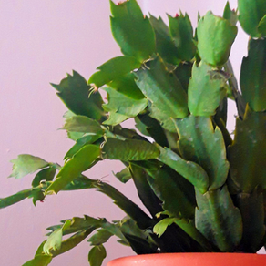 3 Types of Cactus Plants and Succulents Anyone Can Care For Indoors