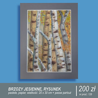 Rysunek pni brzóz z żółtymi liśćmi. Jesienny obrazek narysowany pastelami, format A4, oprawa passe-partout w cenie.