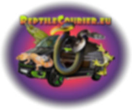 Couriers - REPTILECOURIER.EU | Romford, UK | Royalracksandmorphs