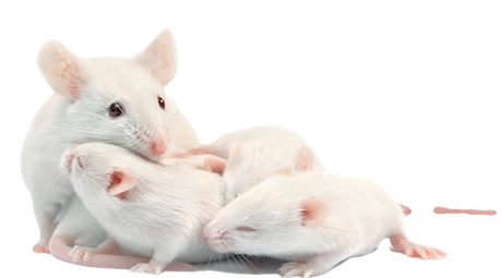 WHITE%20MICE_edited.png