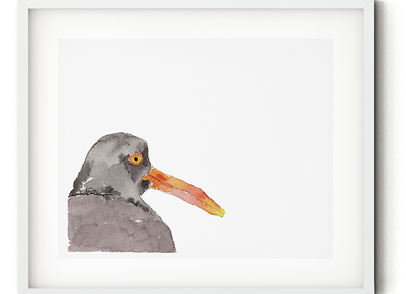 Watercolor Black Oyster Catcher Print