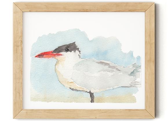 Watercolor Caspian Tern Print