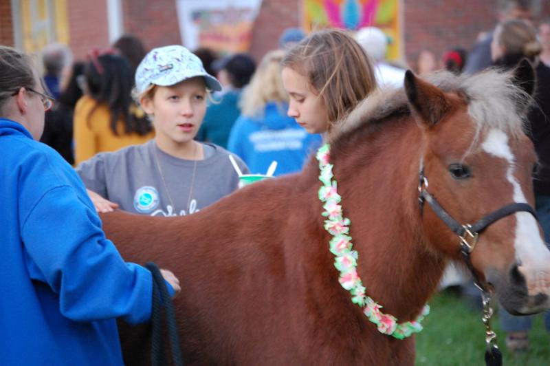 Everyone loves horses!