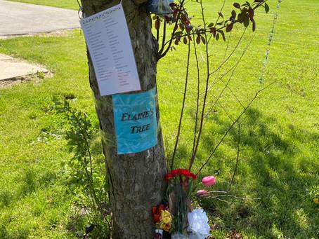 Elaine's Tree