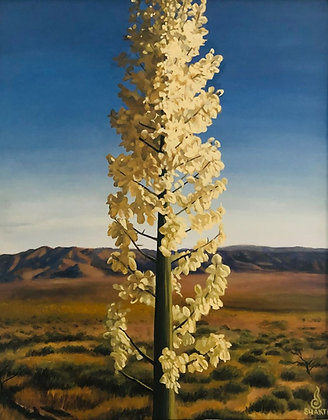 Yucca - Gallery Page