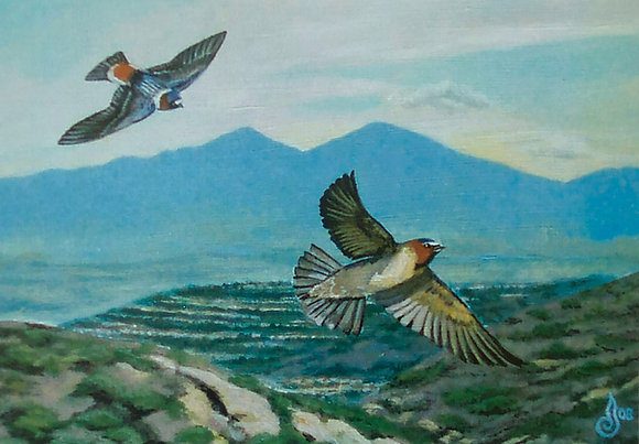 SWALLOWS IN THE SHADOW OF SADDLEBACK