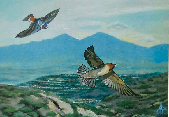 SWALLOWS IN THE SHADOW OF SADDLEBACK - BB