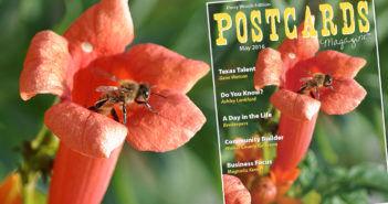 Postcard artical
