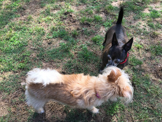 Meeting new friends at Magnolia kennel