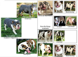 Photo Pedigree