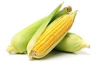 Corn on white background .jpg