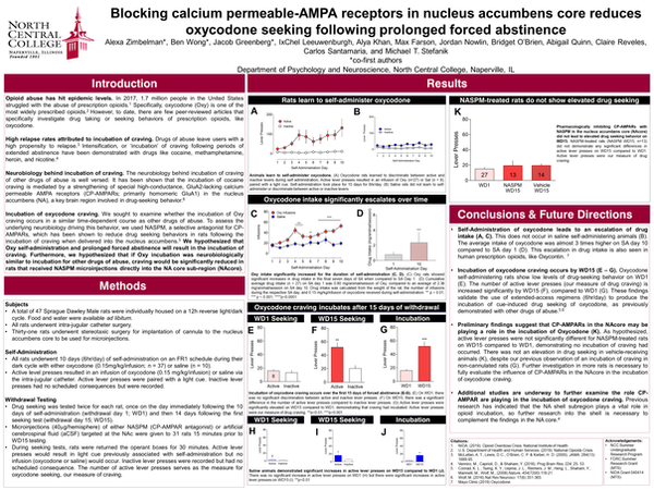 Blocking Calcium-Permeable AMPA-Receptors in the Nucleus Accumbens Core Reduces Oxycodone Seeking Following Prolonged Forced Abstinence