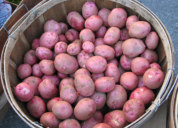 """""""Red Gold"""" Potatoes"""