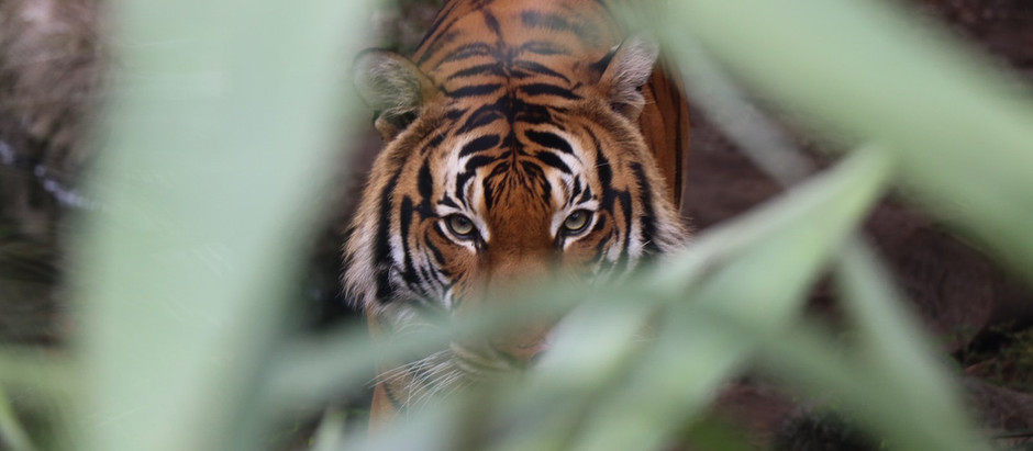 What Can We Learn from Tiger King?