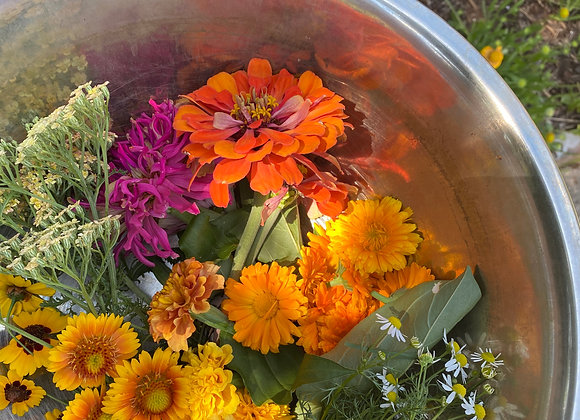 Natural Dyeing with Local Plants 9/26