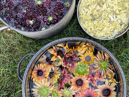 Natural Dye Series - Linen