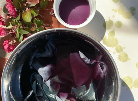 30 Local Dye Plants