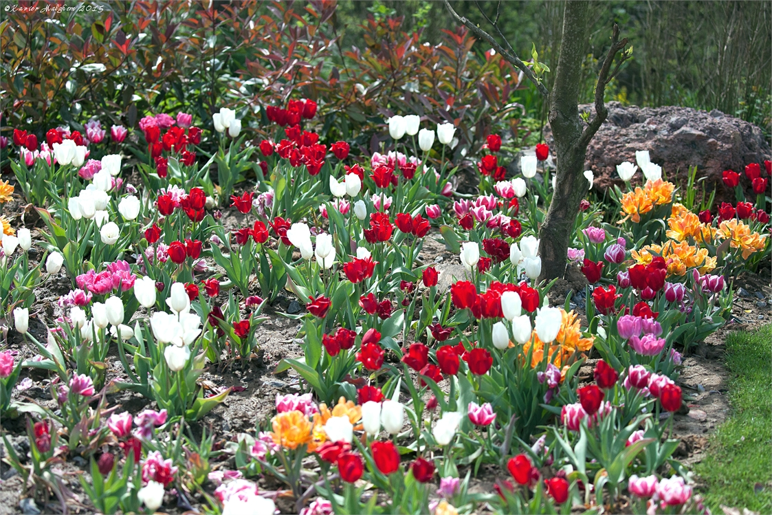 Fleurs Pairi94