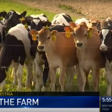 New York dairy farms rely on undocumented immigrants investigation
