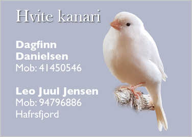 Dagfinn & Leo Hvit kanari.jpg