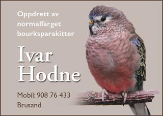 Ivar Hodne 2020