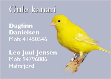 Dagfinn & Leo gul kanari.jpg
