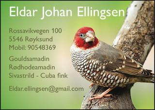 Eldar Ellingsen.jpg