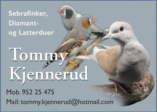 Tommy Kjennerud
