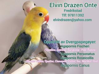 Elvin Drazen Onte 2021 oppdrett annonse.