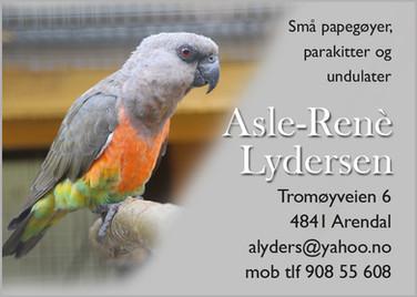 Asle Rene Lydersen.jpg