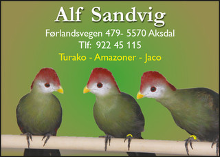 Alf Sandvig.jpg