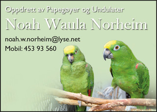 Noah W. Norheim.jpg