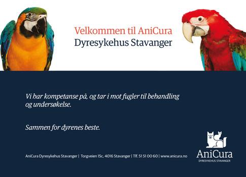 AniCura Dyresykehus Stavanger