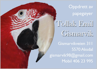 Tollak Emil Gismarvik.jpg