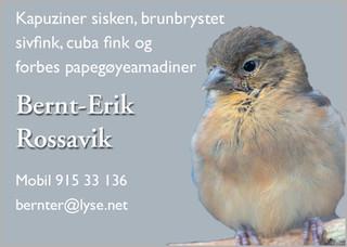 Bernt Erik Rossavik.jpg