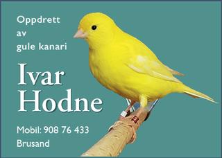 ivar Hodne 2021.png